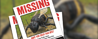 Missing Bee